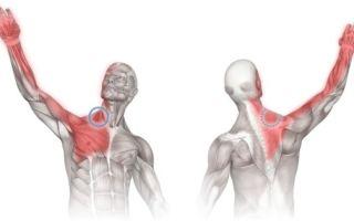 Боли в руке от плеча до кисти: возможные заболевания и характеристика болевых ощущений, рекомендованные методы терапии и профилактики