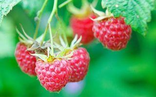 Употребление малины при подагре: химический состав и лечебные свойства ягоды, можно ли ее есть при заболевании и в каком виде, рецепты целебных средств