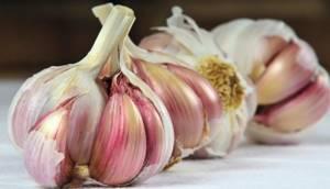 Травы при артрите и артрозе суставов: фитотерапия в домашних условиях, неродные рецепты, самые эффективные растения и сборы