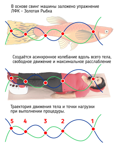 На каких тренажерах можно заниматься при грыже позвоночника: основные принципы тренировок, противопоказания и ограничения в нагрузках, типы разрешенных упражнений и устройство Бубновского