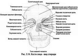 Перелом глазницы: классификация и причины травмы, первые признаки и отличительные симптомы, первая помощь и методы лечения, реабилитация и возможные осложнения