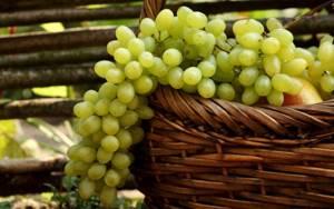 Употребление винограда при подагре: польза растения, можно или нельзя есть при заболевании, нормы и правила потребления, противопоказания и возможный вред