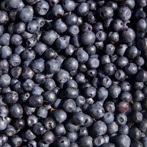Черника при подагре: полезные свойства ягоды и ее влияние на заболевание, рецепты лечебных средств и способы их применения, противопоказания к употреблению