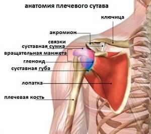 Подвывих плечевого сустава: виды и причины повреждения, характерные симптомы и диагностика, техника вправления и лечебные мероприятия, реабилитация и прогноз