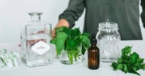 Лечение суставов крапивой: польза и вред растения, правила применения и народные рецепты, приготовление компрессов, настоев и отваров в домашних условиях, противопоказания