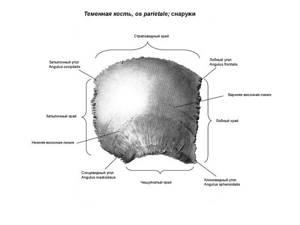 Линейный перелом затылочной кости: классификация и причины травмы, характерные симптомы и диагностика, способы лечения и возможные осложнения, прогноз для жизни