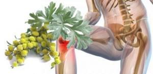 Использование полыни при лечении суставов: состав растения, показания и противопоказания к лечению, польза, лучшие народные рецепты и отзывы