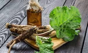 Способы лечения грыжи позвоночника с помощью лопуха: полезные свойства растения, рецепты целебных средств, показания и противопоказания к терапии