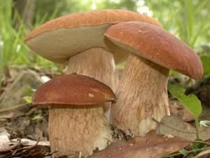 Можно ли есть грибы при подагре: польза и вред, разрешенные и запрещенные виды продукта разрешенные и запрещенные виды способ приготовления и рекомендованные дозы