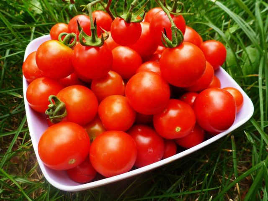 Помидоры при подагре: можно ли есть и в каких количествах, польза и вред овоща, противопоказания к приему и дозировка