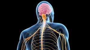 Миелопатия: что это такое и как лечить, описание и признаки заболевания, методы терапии и механизм развития болезни