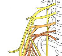 Плексит плечевого сустава: что это такое и как лечить, виды и симптоматика патологии, прогноз и профилактика болезни, современные методики лечения и диагностики