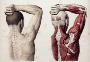 Как убрать вдовий горб на шее в домашних условиях: упражнения и массаж для устранения недуга