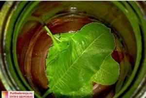 Листья хрена от отложения солей: полезные свойства и вред растения, действие листьев и народные рецепты применения, противопоказания и побочные эффекты