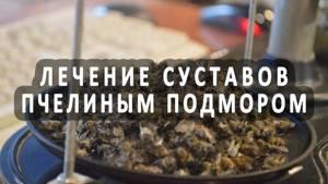 Подмор пчелиный для лечения суставов: что это такое и как его приготовить в домашних условиях, противопоказания к лечению и правила терапии, польза и вред