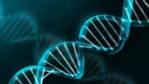 Миелодисплазия: причины развития и формы недуга, особенности диагностики и характерные симптомы, современные методы лечения и показания к операции, прогноз для жизни