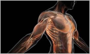 Алоэ для суставов: лечебные свойства, рецепты настойки на водке, преимущества и противопоказания к применению