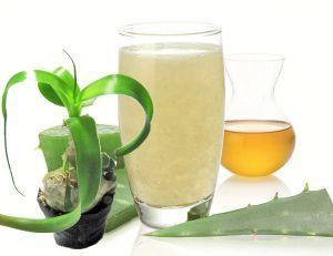 Индийский лук: химический состав и полезные свойства растения, рецепт приготовления настойки и правила ее применения, противопоказания к использованию, отзывы пациентов