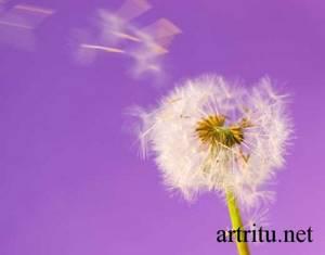 Аллергический артрит: как проходит процесс лечения и какие способы лучше, патогенез и причины заболевания