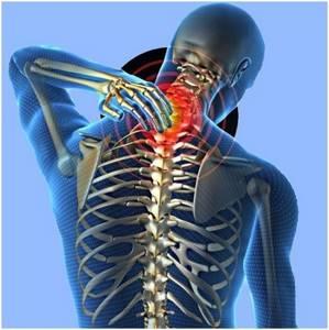 Пиявки при остеохондрозе шейного отдела: особенности проведения процедуры, необходимое количество сеансов терапии, показания и противопоказания