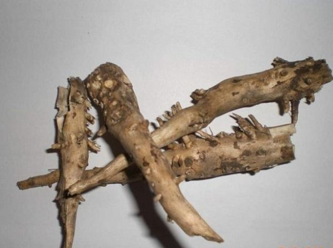 Укроп и подагра: как пряность влияет на заболевание, можно ли ее есть и в каких количествах, способы применения растения в народной медицине и рецепты лечебных средств