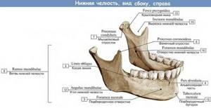 Хруст при жевании в челюсти: симптомы и причины заболевания, консервативное лечение и хирургическое вмешательство, последствия и прогноз