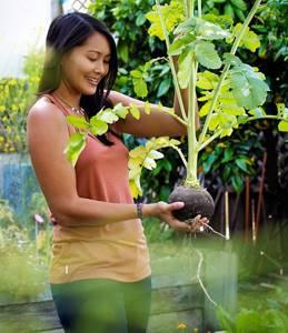 Редька — полезное средство для борьбы с подагрой: состав и полезные свойства корнеплода, правила и способы его применения, противопоказания и меры предосторожности